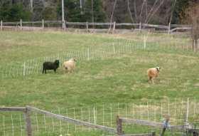 A week earlier, very hot wooly ones